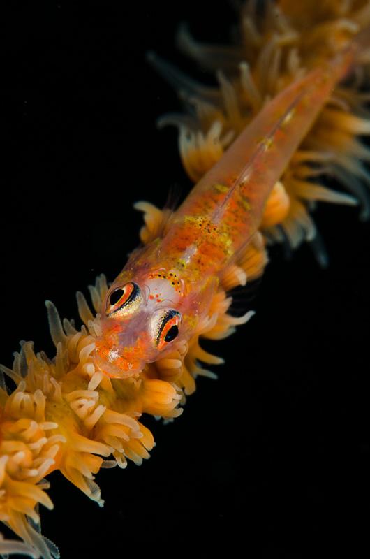 Undervattensfoto Moalboal.