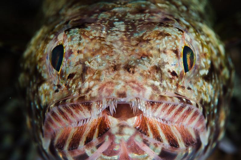 Undervattensfotograf Stefan Beskow moalboal-7
