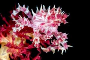 Undervattensfotografering på Bali
