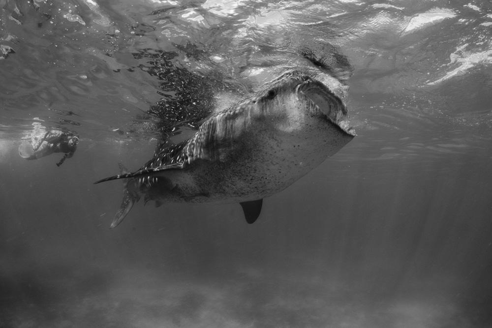 Undervattensfotograf Stefan Beskow