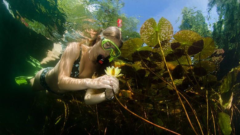 Undervattensfotografering Stefan Beskow