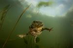 Undervattensfotograf Stefan Beskow-1-2.jpg