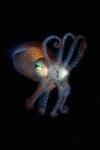 squid11110108.jpg