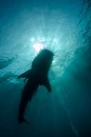 Undervattensfotograf Stefan Beskow-6.jpg